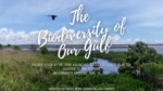 The Biodiversity of Our Gulf by Dr. John Valentine and Sally Pearsall Ericson