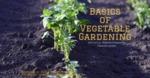 Basics of Vegetable Gardening